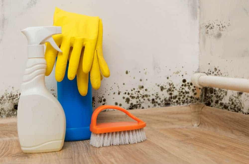 Kill Mold using bleach