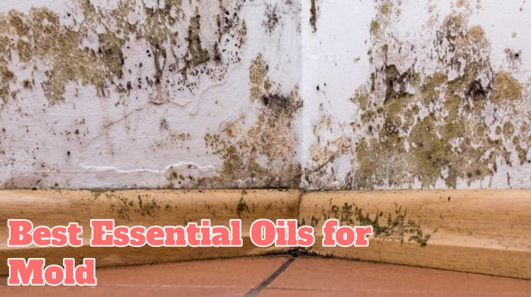 Best Essential Oils for Mold