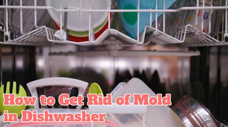 Get Rid of Mold in Dishwasher