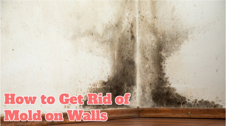 Get Rid of Mold on Walls