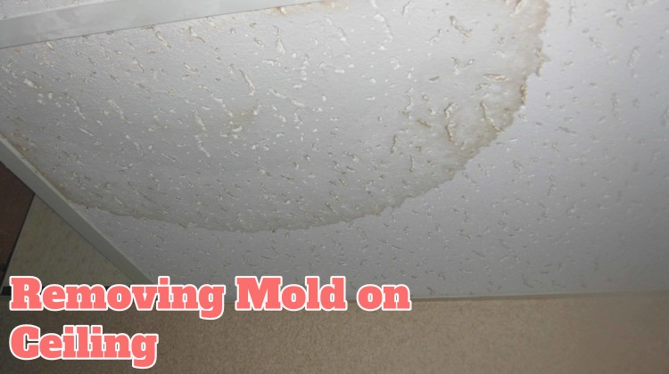 Removing Mold on Ceiling
